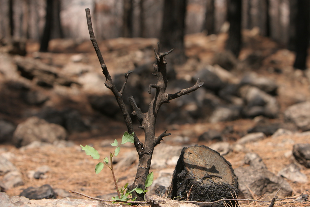 Wounded Forests 05